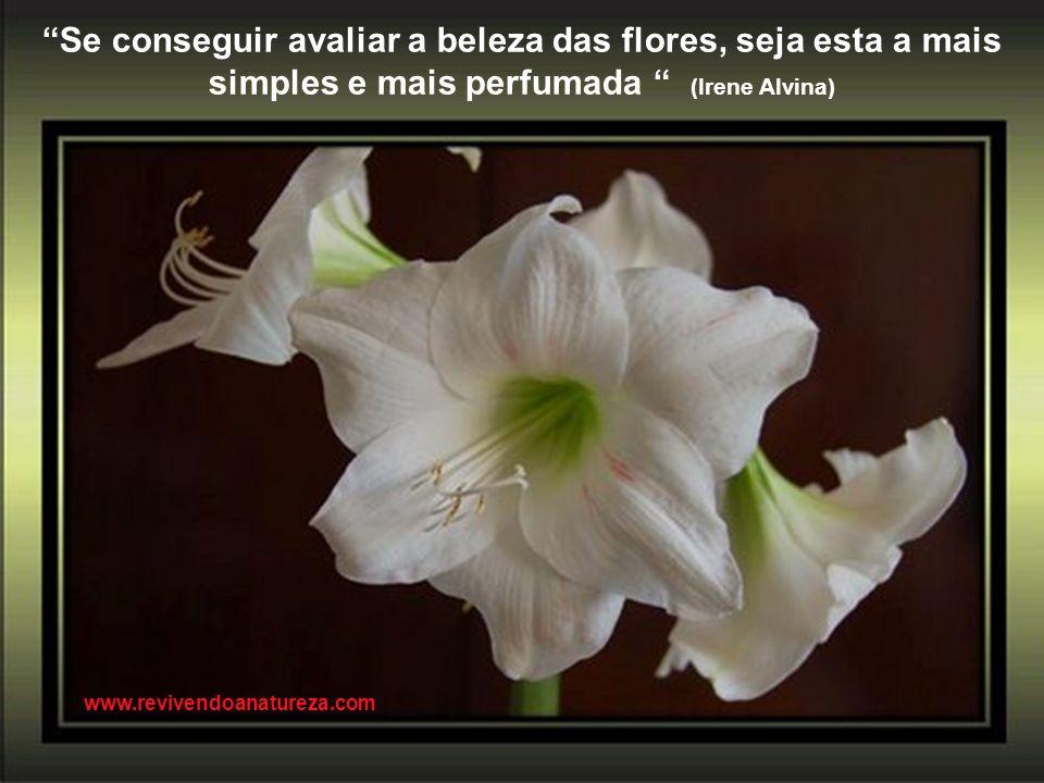Se não podemos compreender o mínimo de uma flor ou de um inseto, como poderemos compreender o máximo do Universo (Marquês de Maricá) www.revivendoanat