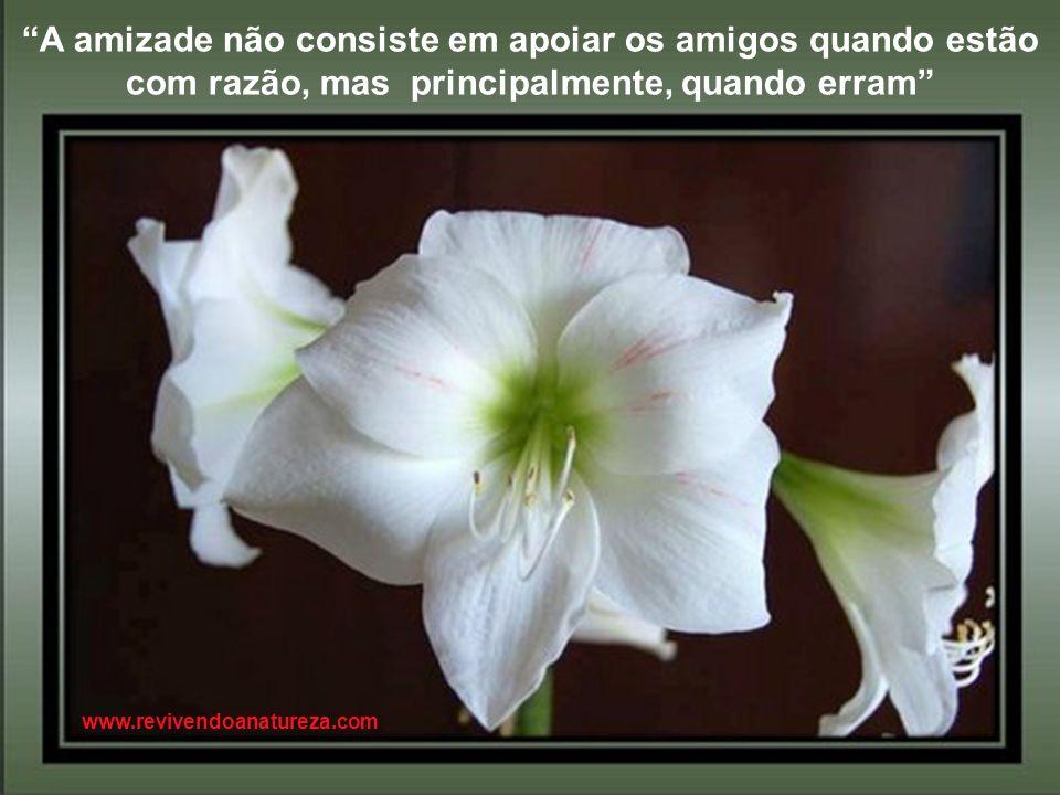 Ser feliz não é apenas comemorar o sucesso e sim agradecer a Deus pela beleza das flores (Irene Alvina) Não coloque um ponto final nas suas esperanças
