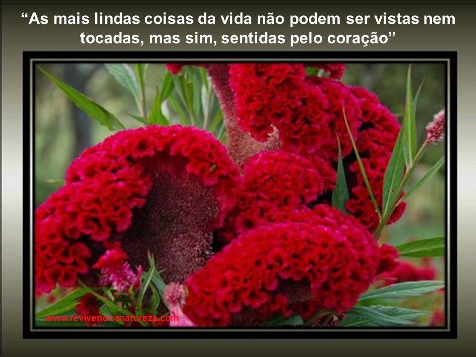Se não houver frutos, valeu a beleza das flores; se não houver flores, valeu a sombra das folhas; se não houver folhas, valeu a intenção da semente ww