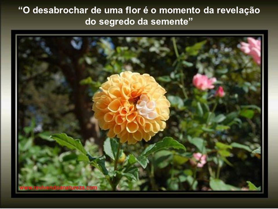 Os insetos refletem na fragilidade das flores (Irene Alvina) www.revivendoanatureza.com