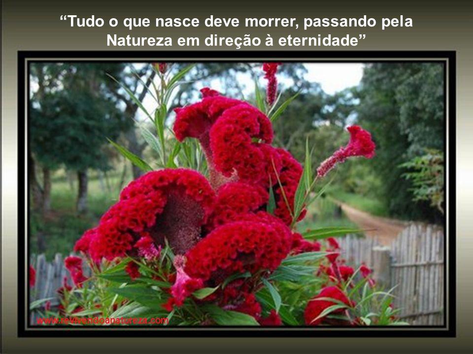 O desabrochar de uma flor é o momento da revelação do segredo da semente www.revivendoanatureza.com