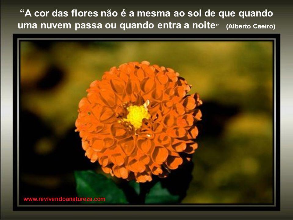 Tudo o que nasce deve morrer, passando pela Natureza em direção à eternidade www.revivendoanatureza.com