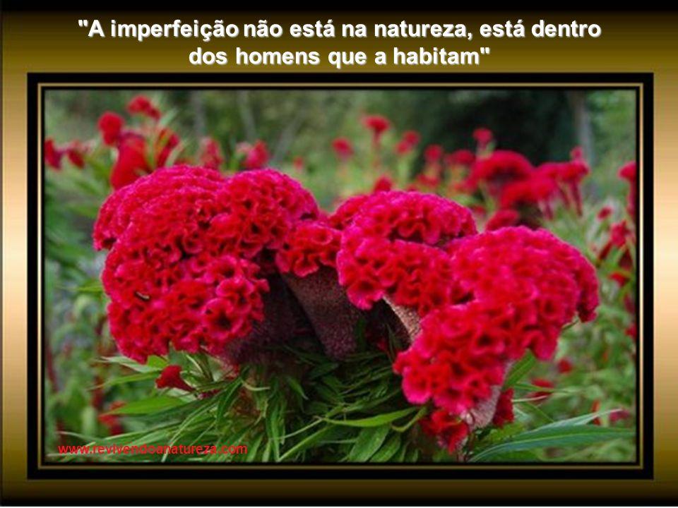 A cor das flores não é a mesma ao sol de que quando uma nuvem passa ou quando entra a noite (Alberto Caeiro) www.revivendoanatureza.com
