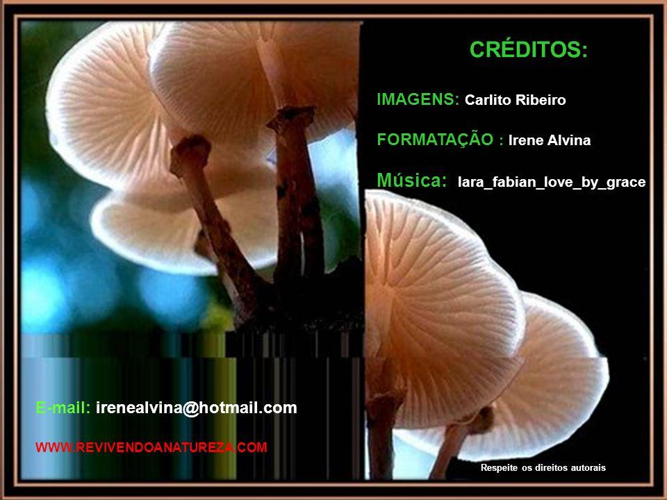 Colhei a flor, que, se não for colhida, cairá por si mesma, deformada (Ovídio) www.revivendoanatureza.com