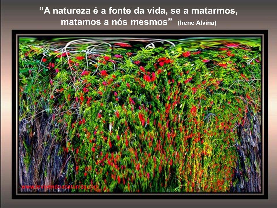 www.revivendoanatureza.com A amizade não consiste em apoiar os amigos quando estão com razão, mas principalmente, quando erram