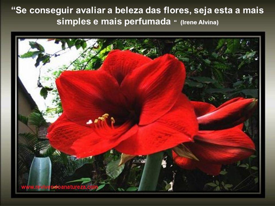 A natureza é a fonte da vida, se a matarmos, matamos a nós mesmos (Irene Alvina) www.revivendoanatureza.com