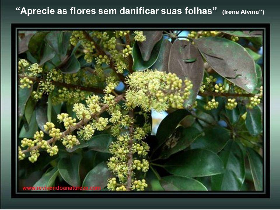Se conseguir avaliar a beleza das flores, seja esta a mais simples e mais perfumada (Irene Alvina) www.revivendoanatureza.com