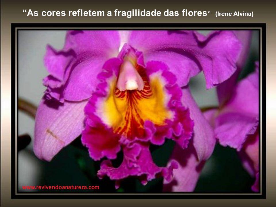 Aprecie as flores sem danificar suas folhas (Irene Alvina ) www.revivendoanatureza.com