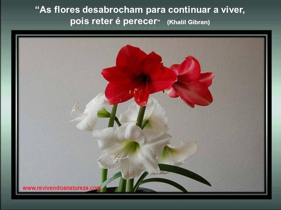 As cores refletem a fragilidade das flores (Irene Alvina) www.revivendoanatureza.com