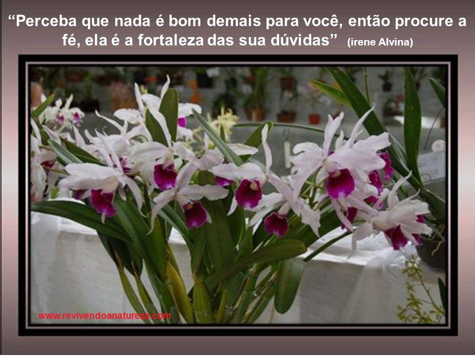 As flores desabrocham para continuar a viver, pois reter é perecer (Khalil Gibran) www.revivendoanatureza.com