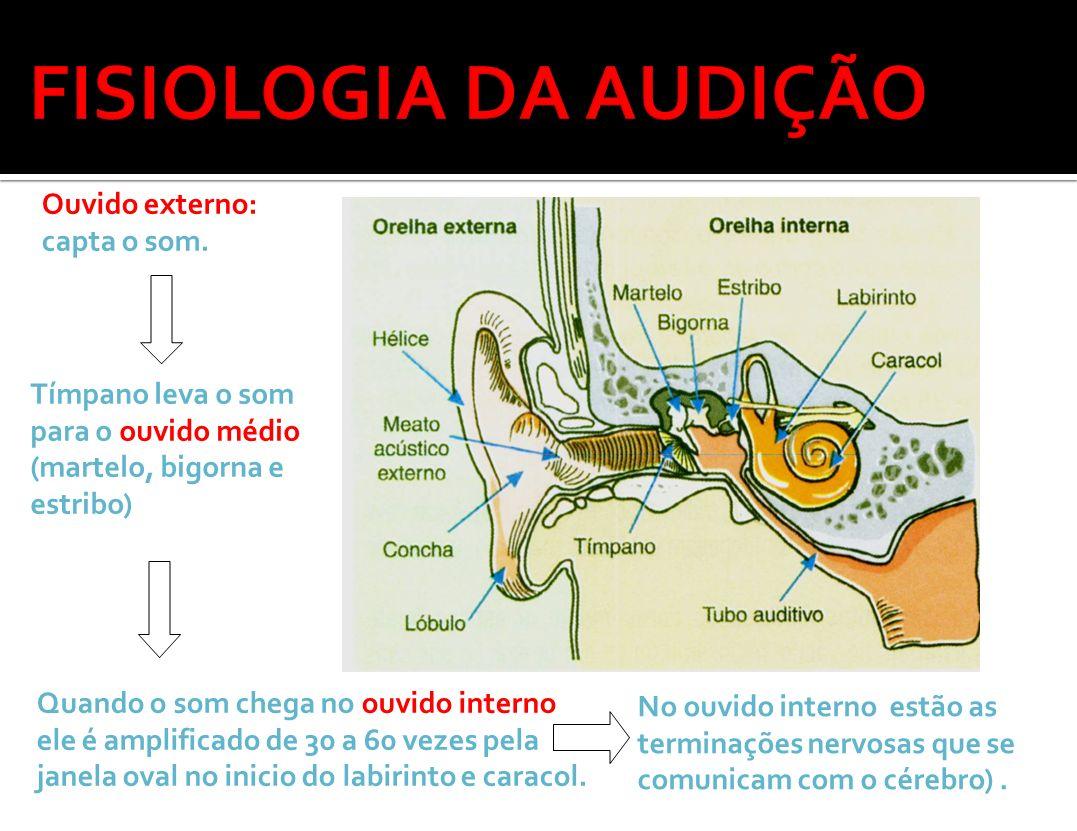 Ouvido externo: capta o som. Tímpano leva o som para o ouvido médio (martelo, bigorna e estribo) Quando o som chega no ouvido interno ele é amplificad