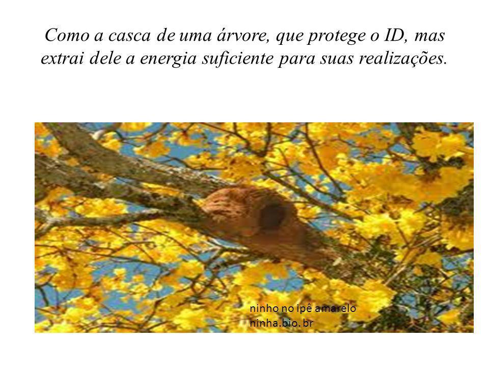 Como a casca de uma árvore, que protege o ID, mas extrai dele a energia suficiente para suas realizações. ninho no ipê amarelo ninha.bio. br