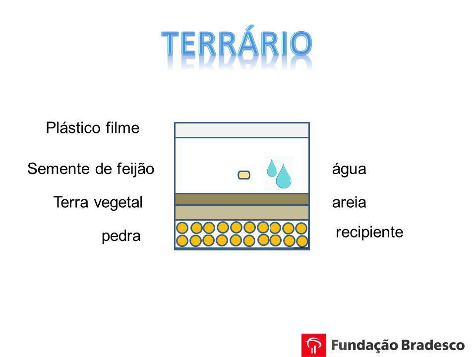 recipiente areia pedra Terra vegetal Plástico filme Semente de feijãoágua
