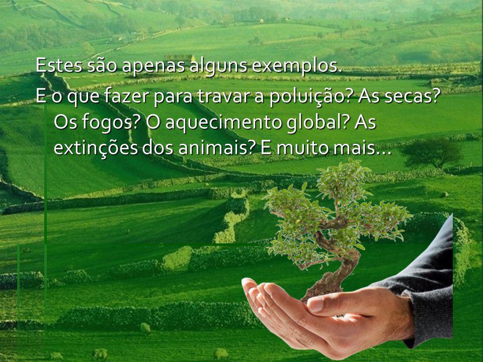 Estes são apenas alguns exemplos. E o que fazer para travar a poluição? As secas? Os fogos? O aquecimento global? As extinções dos animais? E muito ma