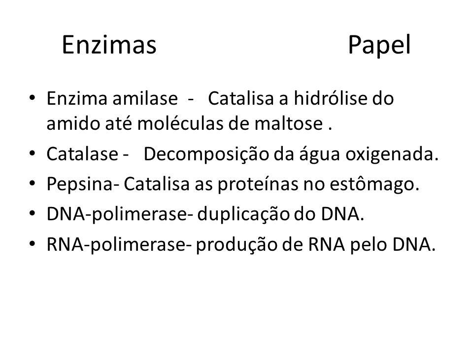 Enzimas Papel Enzima amilase - Catalisa a hidrólise do amido até moléculas de maltose. Catalase - Decomposição da água oxigenada. Pepsina- Catalisa as