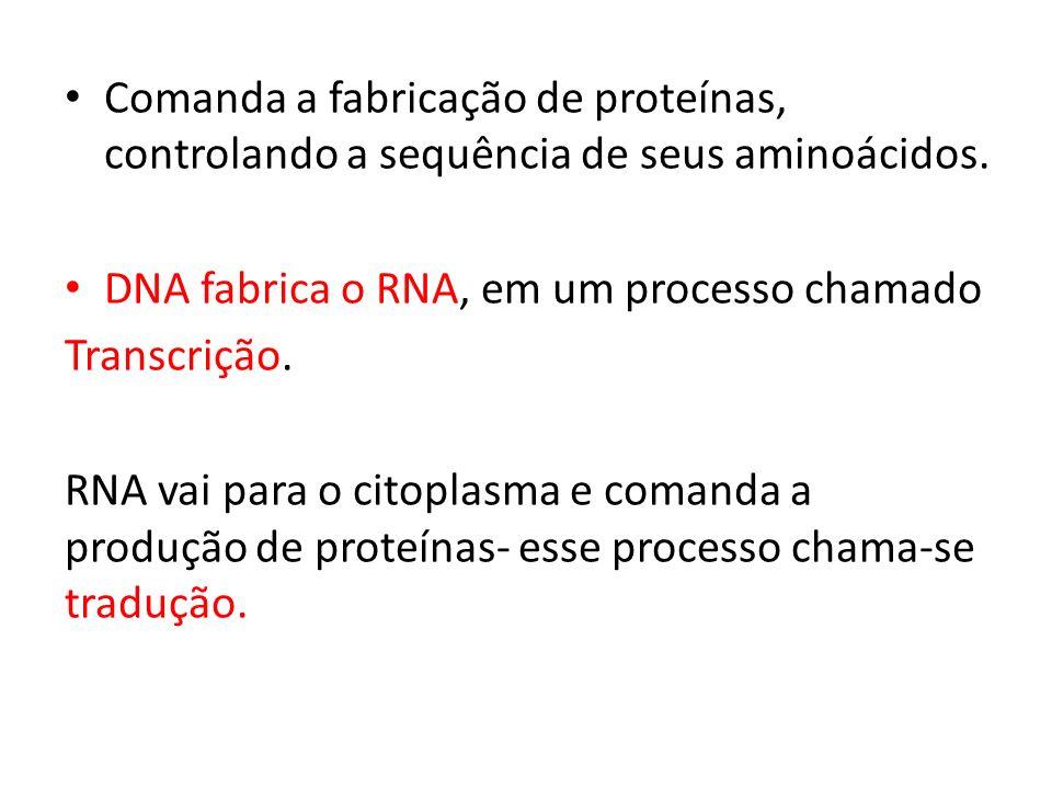 Comanda a fabricação de proteínas, controlando a sequência de seus aminoácidos. DNA fabrica o RNA, em um processo chamado Transcrição. RNA vai para o