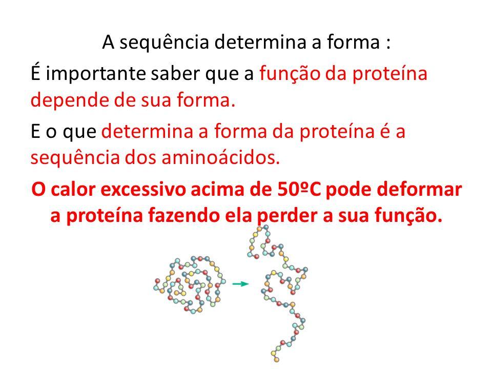 A sequência determina a forma : É importante saber que a função da proteína depende de sua forma. E o que determina a forma da proteína é a sequência