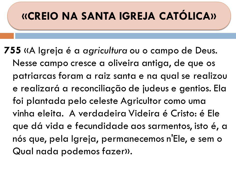 755 «A Igreja é a agricultura ou o campo de Deus. Nesse campo cresce a oliveira antiga, de que os patriarcas foram a raiz santa e na qual se realizou