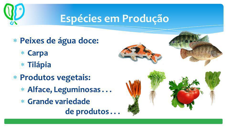 Espécies em Produção Peixes de água doce: Carpa Tilápia Produtos vegetais: Alface, Leguminosas... Grande variedade de produtos...