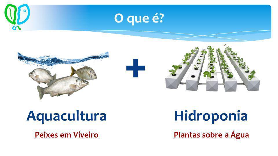 Aquacultura Hidroponia O que é? + Peixes em ViveiroPlantas sobre a Água