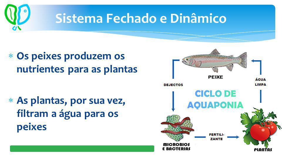 Os peixes produzem os nutrientes para as plantas As plantas, por sua vez, filtram a água para os peixes Sistema Fechado e Dinâmico
