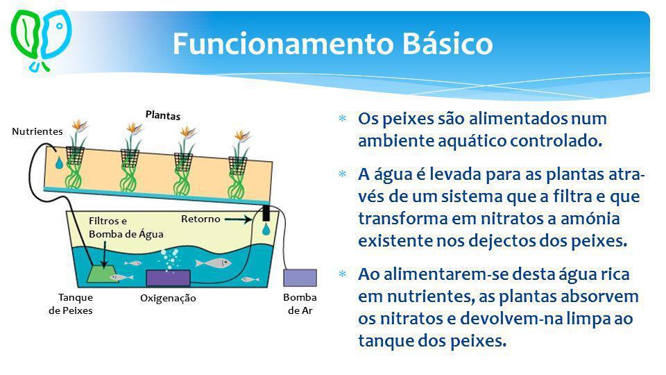 Funcionamento Básico Tanque de Peixes Bomba de Ar Oxigenação Nutrientes Filtros e Bomba de Água Plantas Retorno Os peixes são alimentados num ambiente aquático controlado.