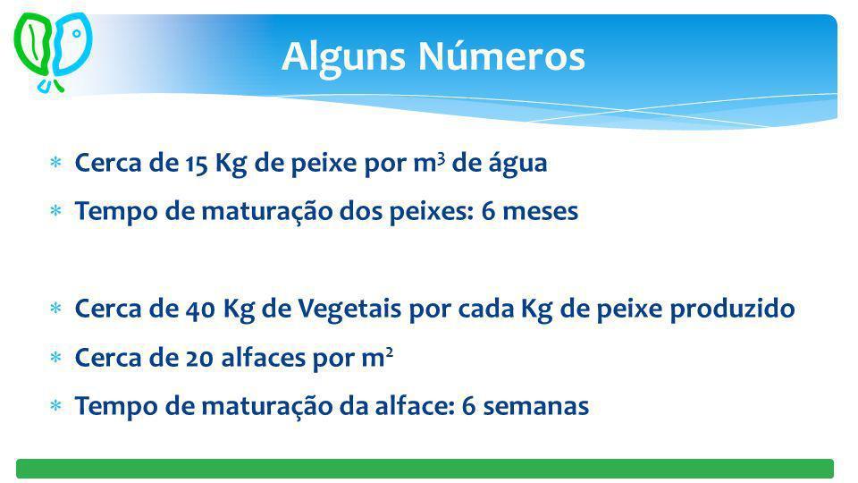 Cerca de 15 Kg de peixe por m 3 de água Tempo de maturação dos peixes: 6 meses Cerca de 40 Kg de Vegetais por cada Kg de peixe produzido Cerca de 20 a