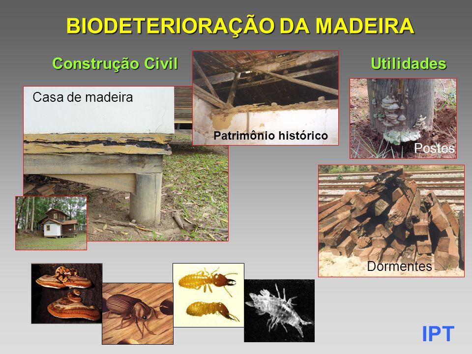 IPT BIODETERIORAÇÃO DA MADEIRA Casa de madeira Utilidades Construção Civil Postes Dormentes Patrimônio histórico