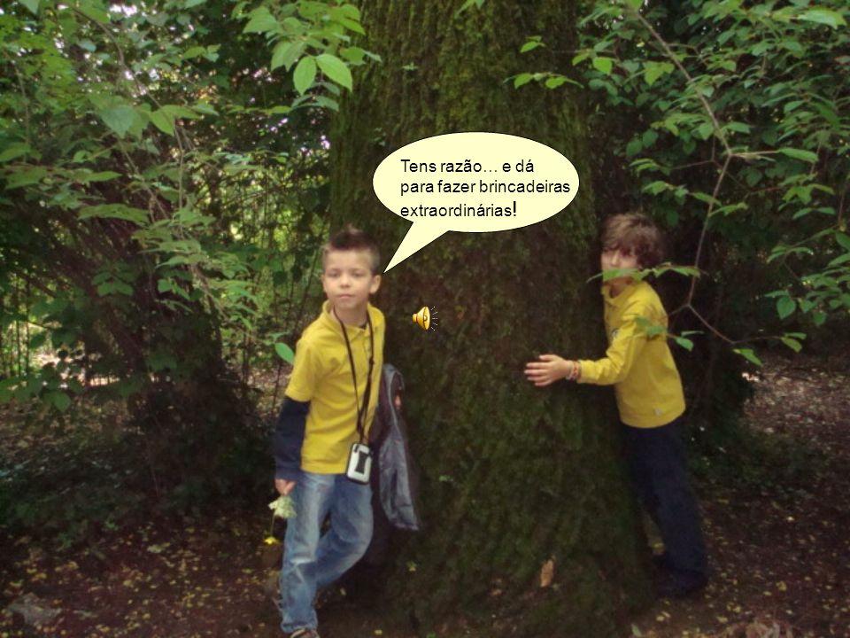Guilherme…já viste o tamanho destas árvores? São muito, muito antigas…