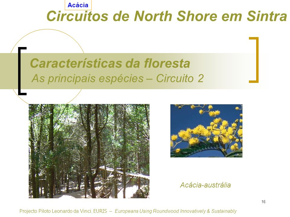 16 As principais espécies – Circuito 2 Características da floresta Projecto Piloto Leonardo da Vinci, EURIS – Europeans Using Roundwood Innovatively &