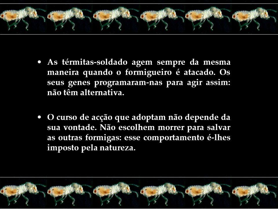 As térmitas-soldado agem sempre da mesma maneira quando o formigueiro é atacado. Os seus genes programaram-nas para agir assim: não têm alternativa. O