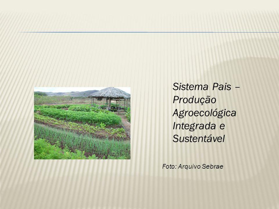 Sistema Pais – Produção Agroecológica Integrada e Sustentável Foto: Arquivo Sebrae