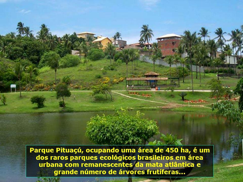 Salvador é uma cidade de muito verde e de belas avenidas. Andar por suas vias já é um grande prazer...