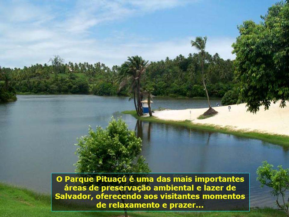 Parque Pituaçú, ocupando uma área de 450 ha, é um dos raros parques ecológicos brasileiros em área urbana com remanescentes da mata atlântica e grande