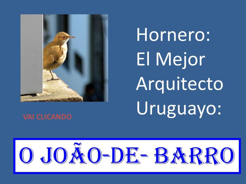 Hornero: El Mejor Arquitecto Uruguayo: O joãO-de- barro VAI CLICANDO
