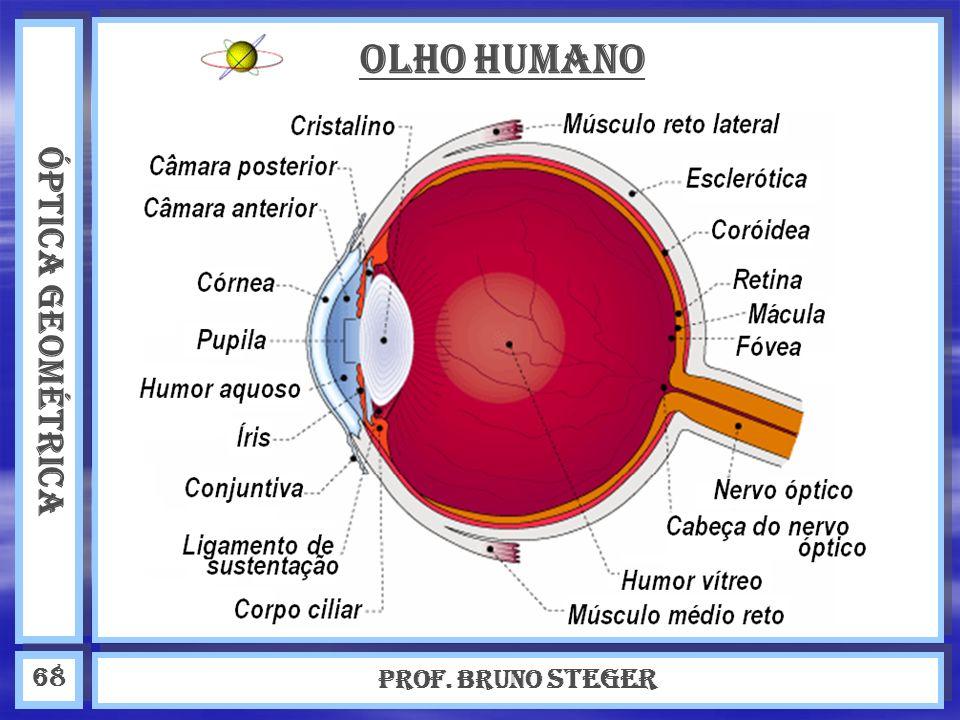 ÓPTICA GEOMÉTRICA Prof. Bruno Steger 68 OLHO HUMANO