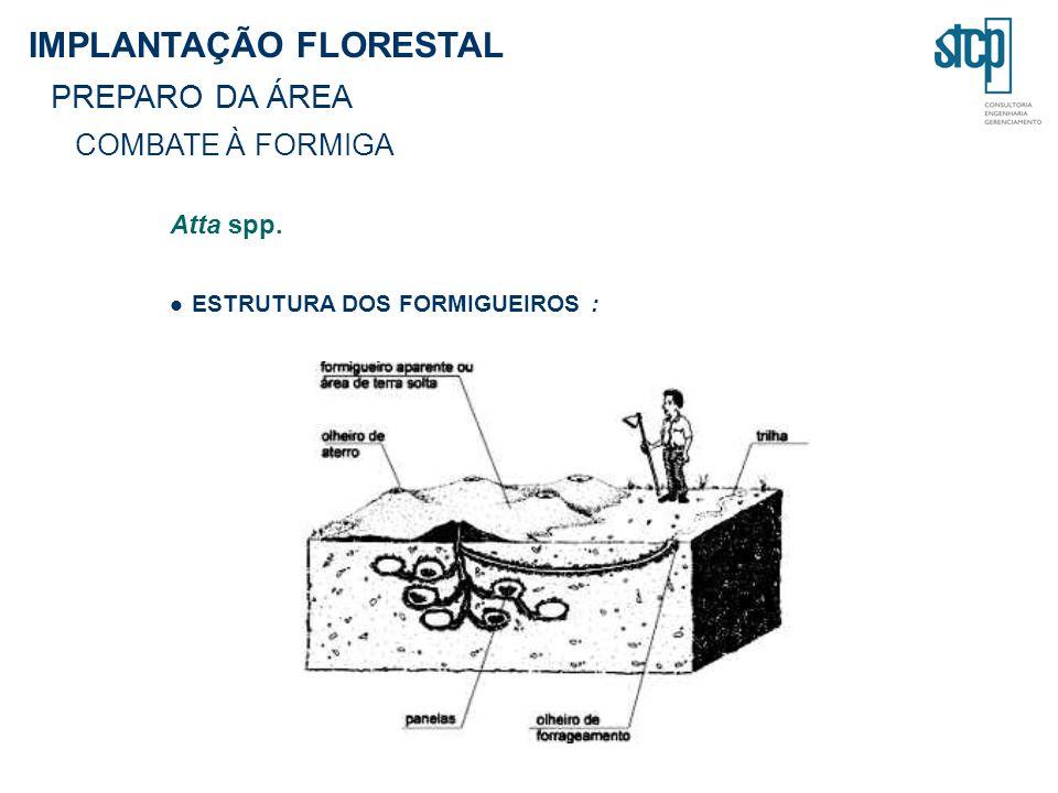 Atta spp. ESTRUTURA DOS FORMIGUEIROS : IMPLANTAÇÃO FLORESTAL PREPARO DA ÁREA COMBATE À FORMIGA