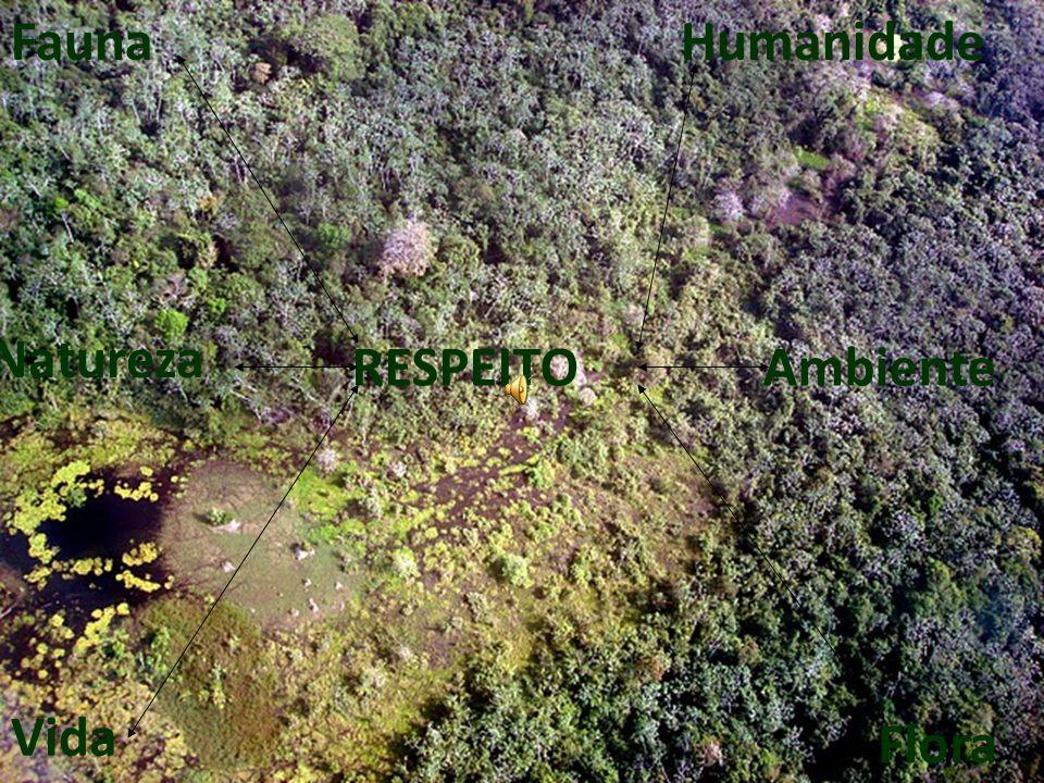 Fauna Vida Flora Humanidade RESPEITOAmbiente Natureza
