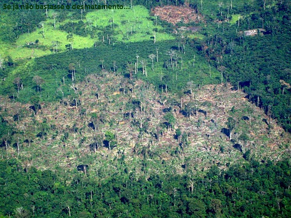 Se já não bastasse o desmatamento...
