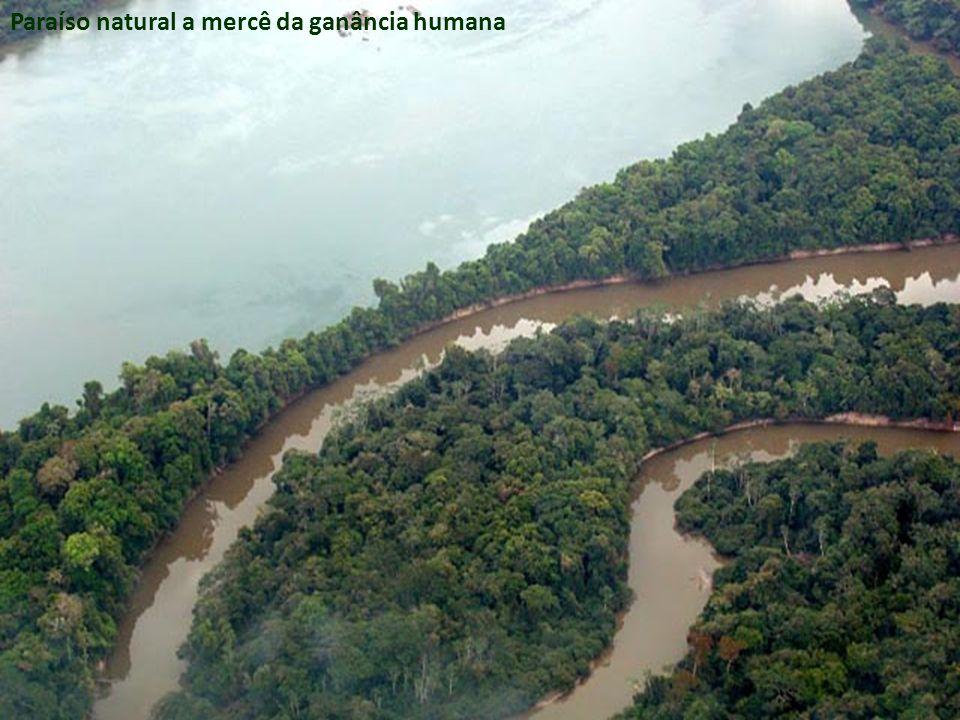 Paraíso natural a mercê da ganância humana