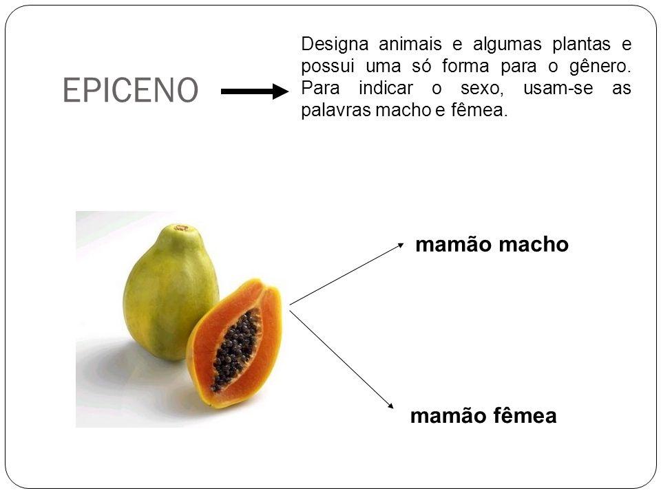 EPICENO Designa animais e algumas plantas e possui uma só forma para o gênero. Para indicar o sexo, usam-se as palavras macho e fêmea. mamão macho mam