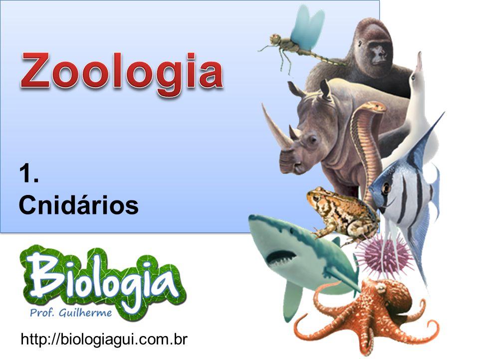 http://biologiagui.com.br 1. Cnidários