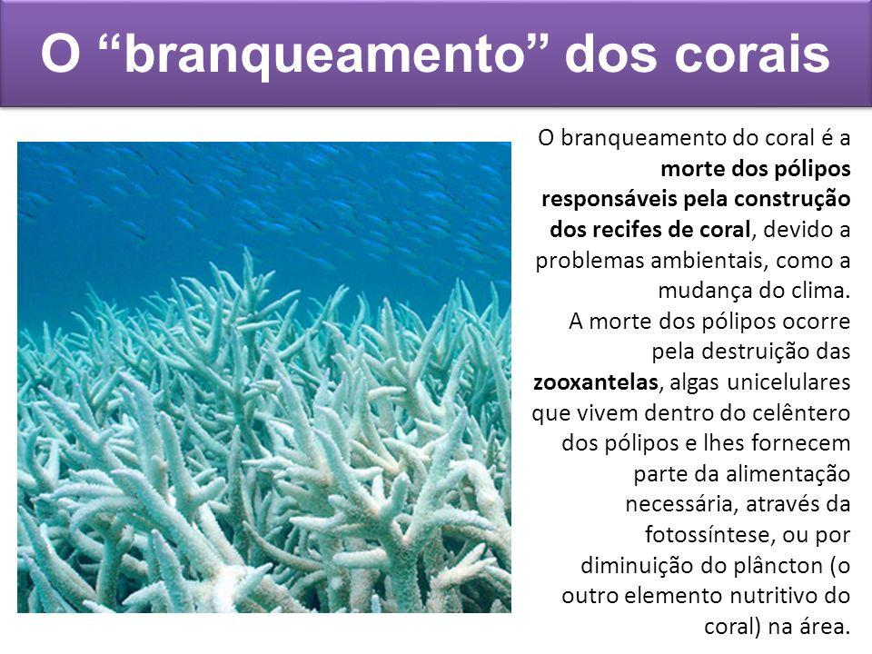 O branqueamento dos corais O branqueamento do coral é a morte dos pólipos responsáveis pela construção dos recifes de coral, devido a problemas ambien