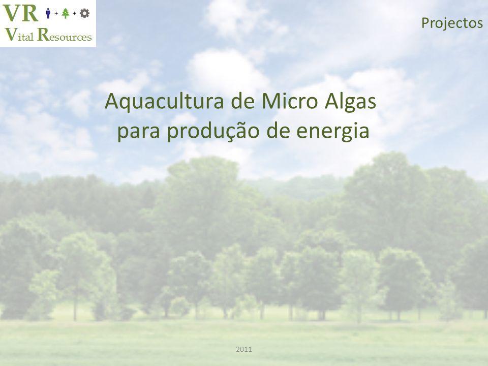 Aquacultura de Micro Algas para produção de energia 2011 Projectos