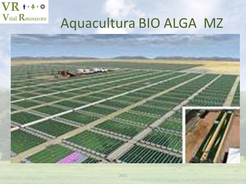 Aquacultura BIO ALGA MZ 2011