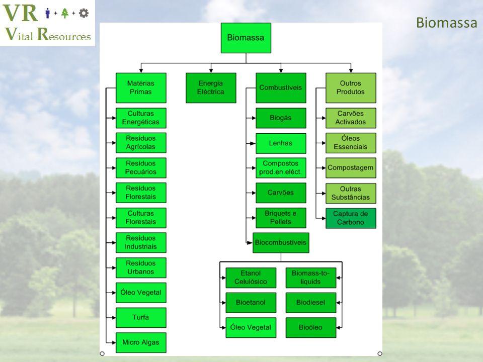 2011 Biomassa – Culturas Energéticas e Florestais