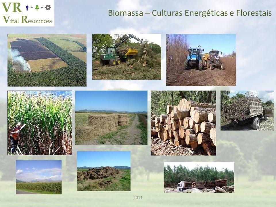 2011 Biomassa – Matéria Prima