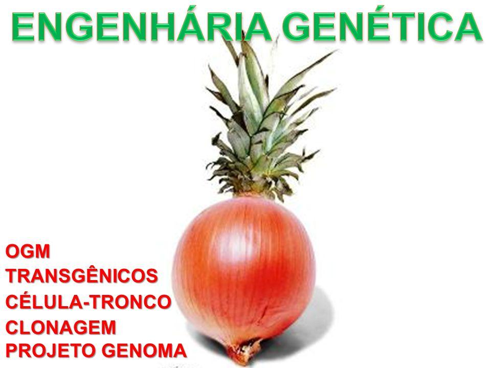 TRANSGÊNICOS CÉLULA-TRONCO CLONAGEM OGM PROJETO GENOMA