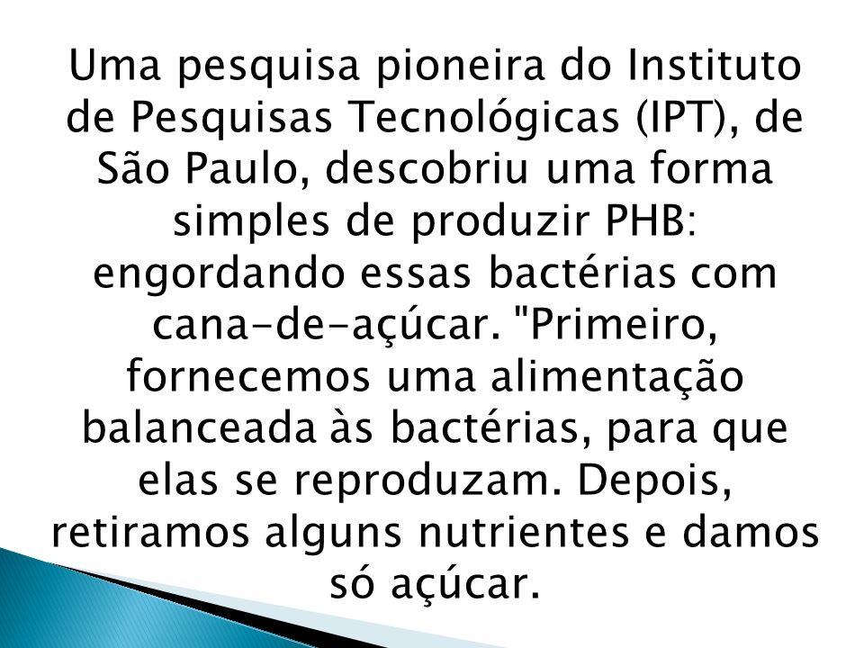 Uma pesquisa pioneira do Instituto de Pesquisas Tecnológicas (IPT), de São Paulo, descobriu uma forma simples de produzir PHB: engordando essas bactér