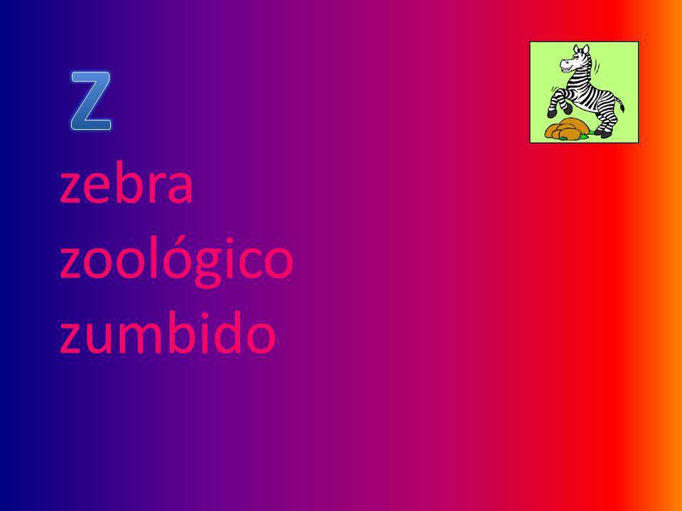 zebra zoológico zumbido